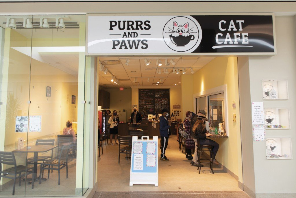 Purrs And Paws 029