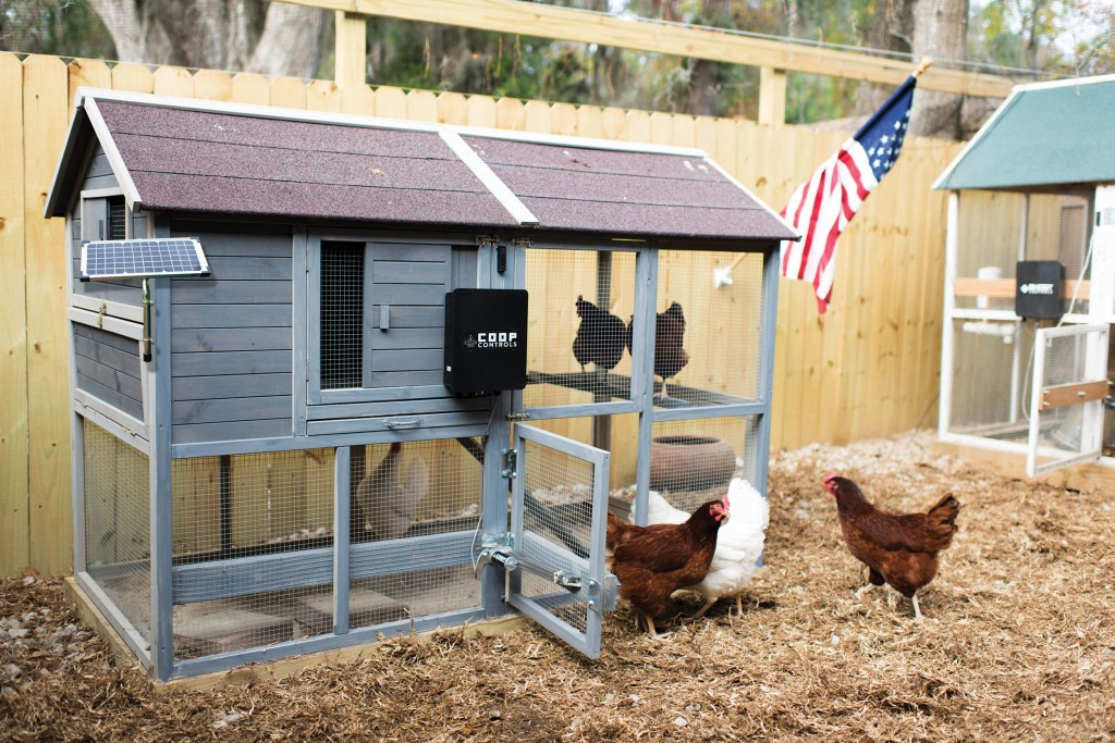 Coop With Solar Panel Ccsz
