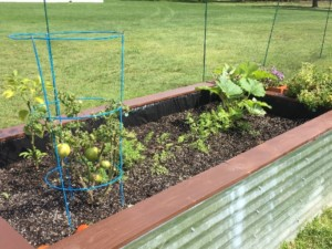 last week i talked about how bad the garden was looking so i removed all the broccoli plants and i really trimmed back the zucchini a lot - Toms Lawn And Garden