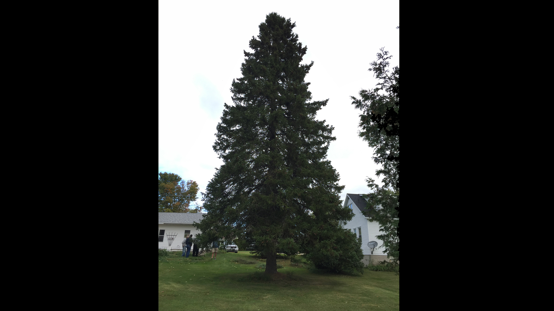Search Begins For State Capital's Next Christmas Tree