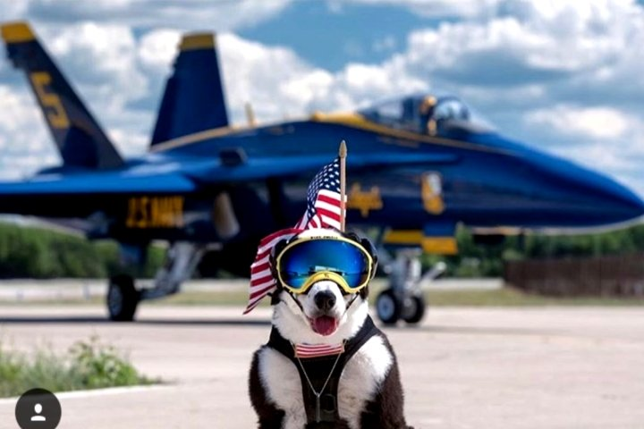 Piper, Traverse City airport dog, passes away from cancer