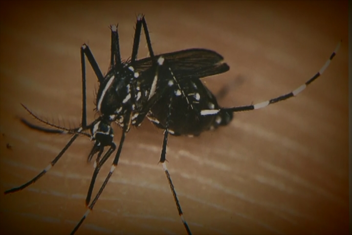 West Nile found in Grand Forks mosquitoes
