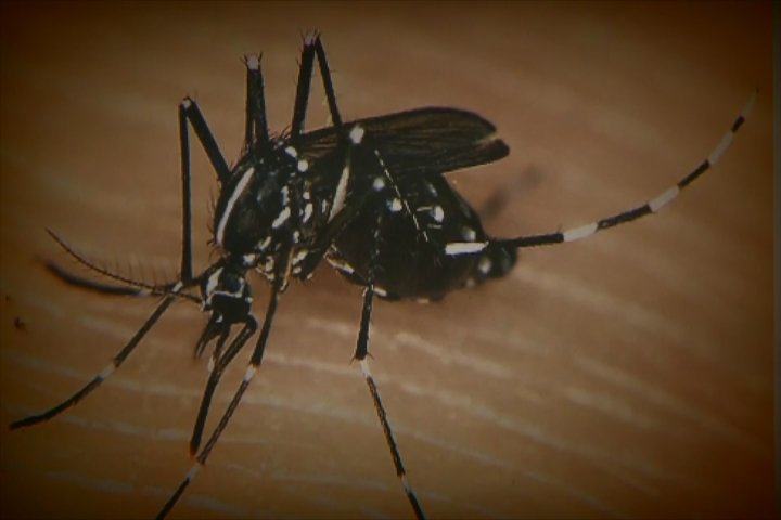 West Nile virus threat shows up near Parma
