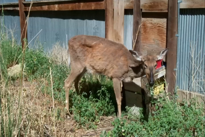DNR Discusses How to Stop Spread of CWD in Lansing - 9 & 10 News