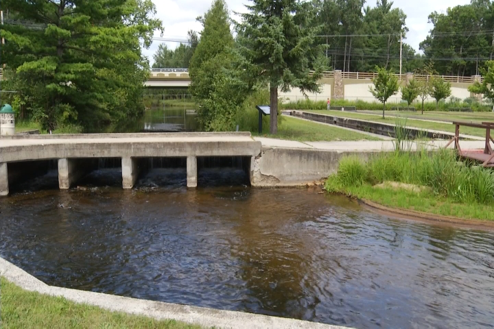Grayling Fish Hatchery Sees Fish Die After Coming Down with 'Ich