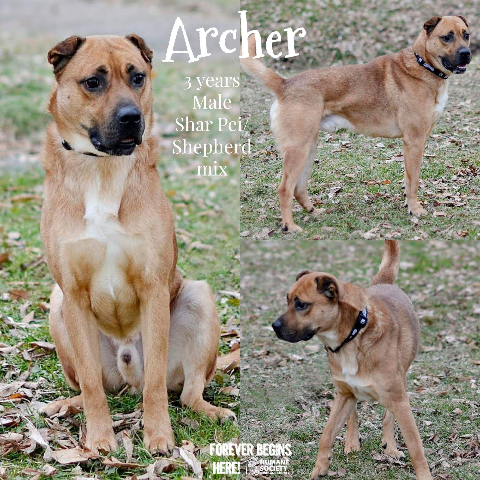 Dog Archer Seeks Home For The Holidays at Humane Society of