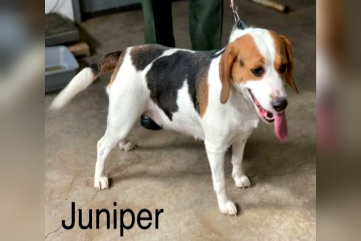 Wexford County Animal Shelter Susie And Juniper 9 Amp 10 News