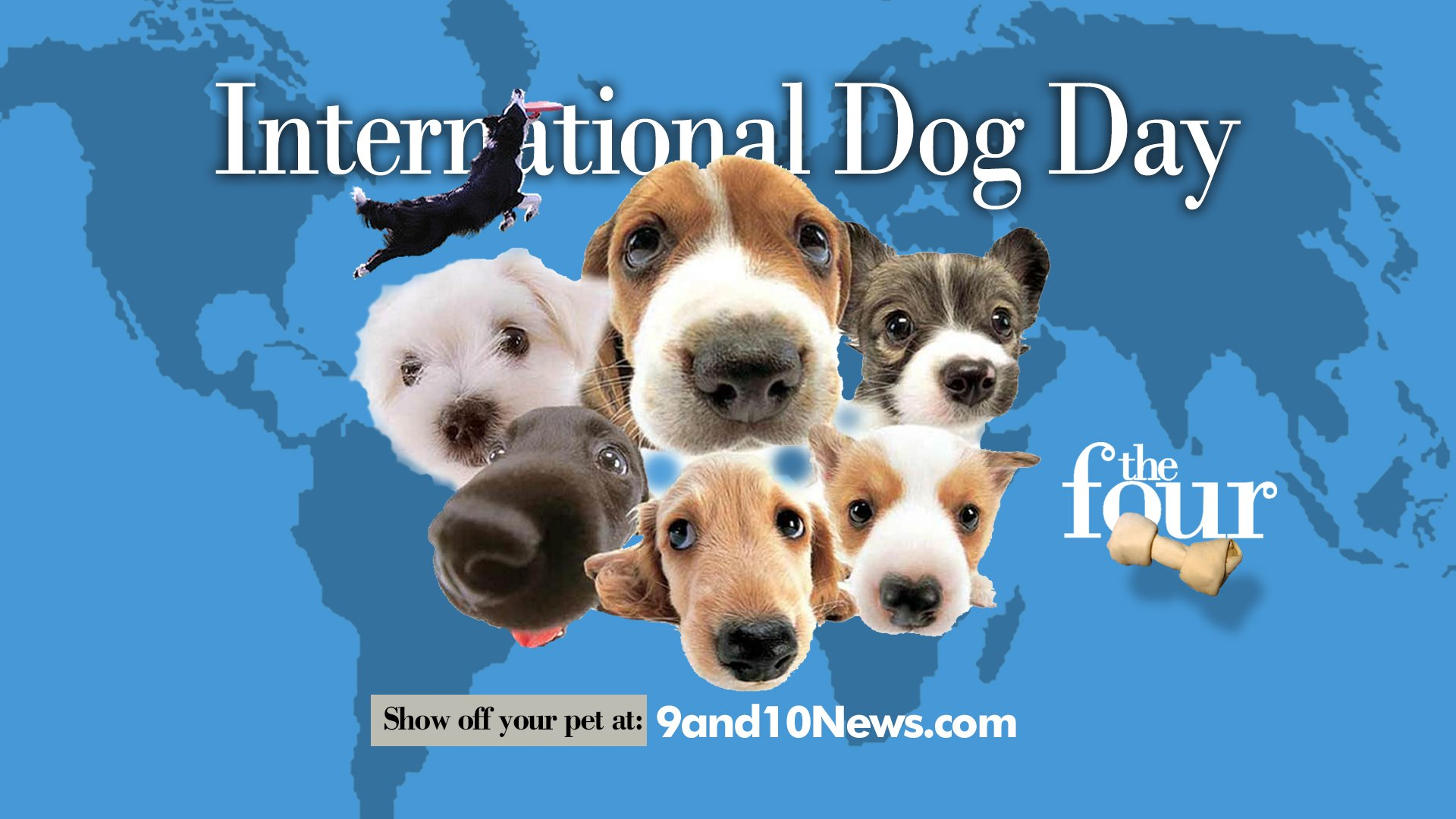 Submit Your Dog Pictures for International Dog Day! - 9 & 10