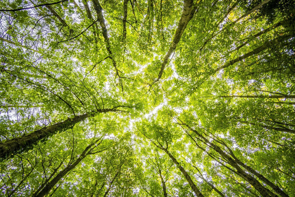 Worms Eyeview Of Green Trees 957024