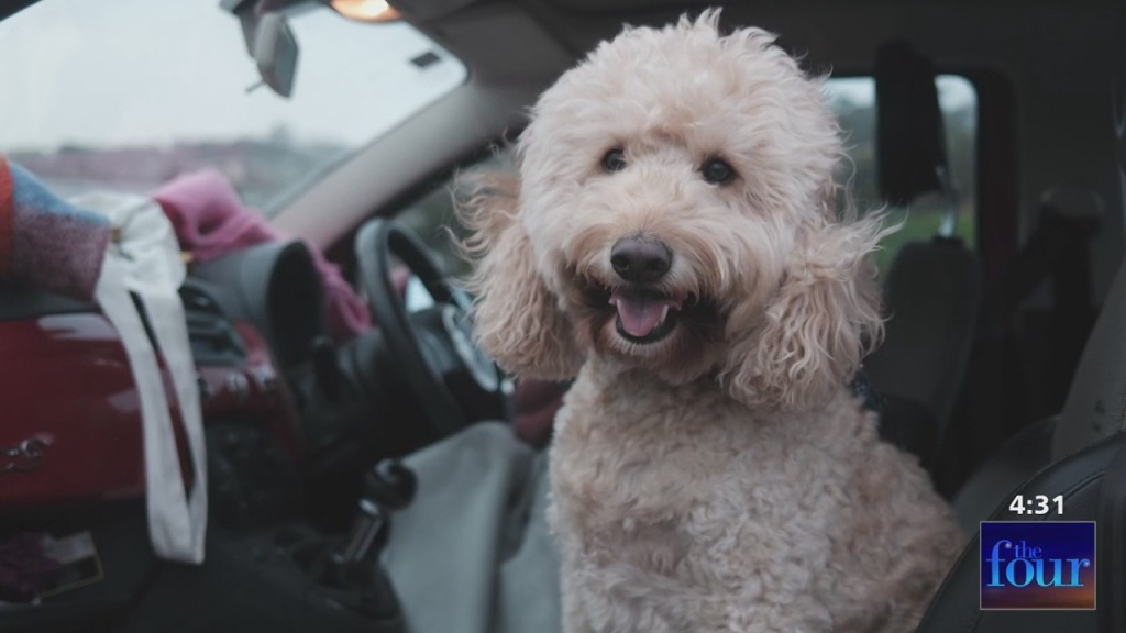 The Four: Dr. Ruthann Lobos Tips & Suggestions For Traveling With Your Animal Companion
