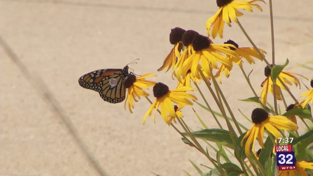 Kingsley Branch Library Holds Monarch Release Party As Butterflies Migrate To Mexico