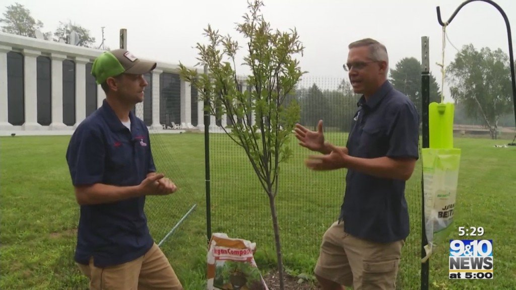 What's Growing With Tom: Flower Bed And Fruit Tree Update