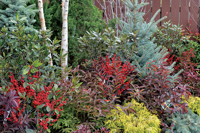 Winterberry And Other Winter Foliage. Photo Courtesy Of Merrifield Garden  Center.