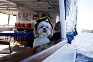 Potomac Riverboat Company Canine Cruises @ Alexandria City Marina