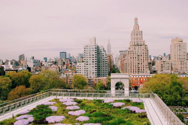 Dejta I New York University