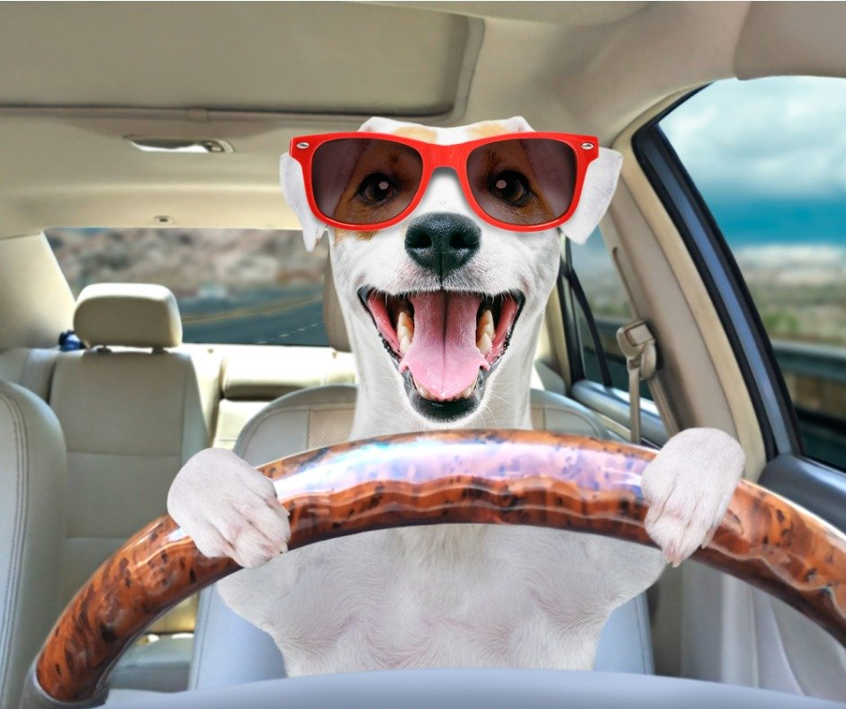 Portrait Of A Funny Dog Jack Russell Terrier In Sunglasses Behind The Picture Id1180219878