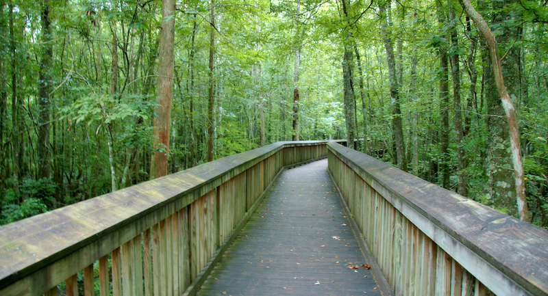 Elevated Path Over A Swamp At Tickfaw State Park