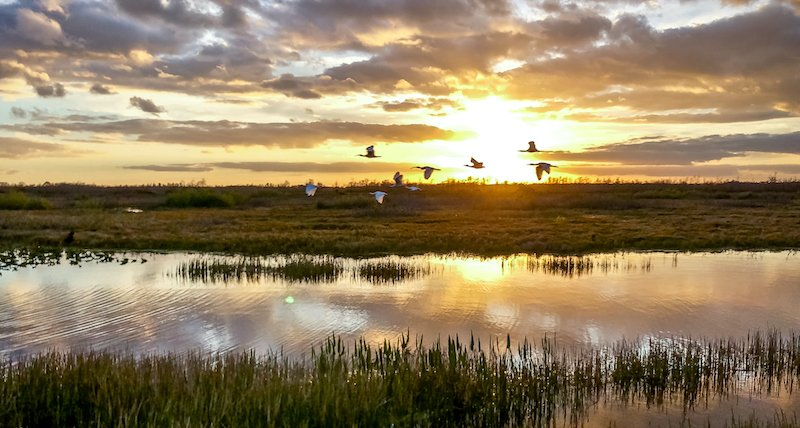 Birds Flying In The Sunset Swamp