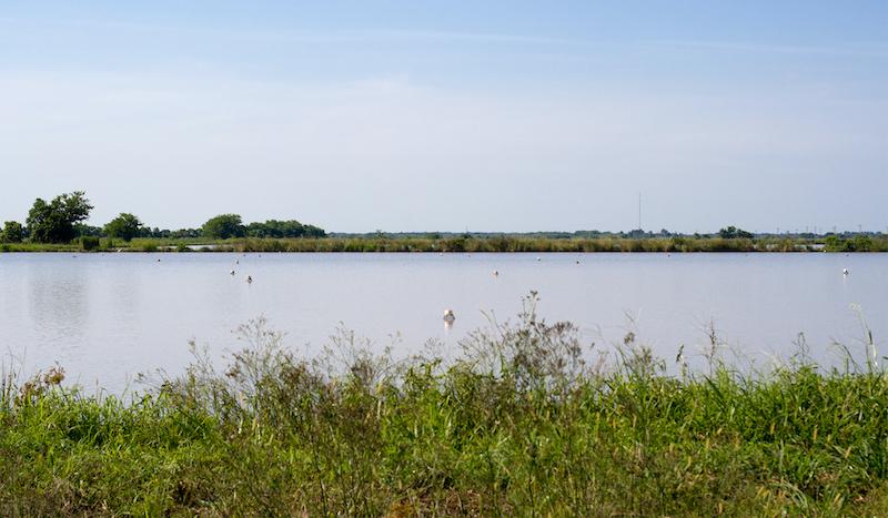Louisiana Crawfish Farm