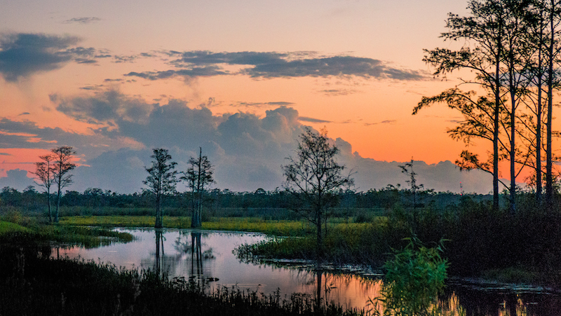 Sunset Through The Trees Of The Swamps