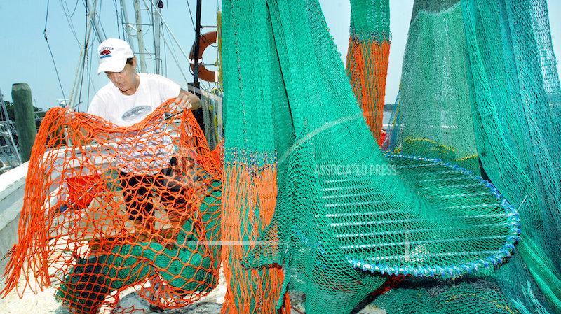 Endangered Turtles Shrimp Nets