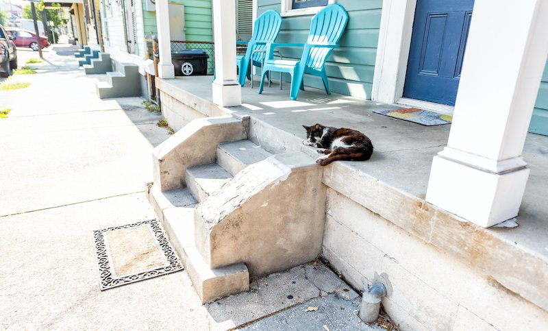 Stray Black And White Cat Sleeping On Porch Sidewalk Street In New Orleans, Louisiana By House Home Entrance Steps