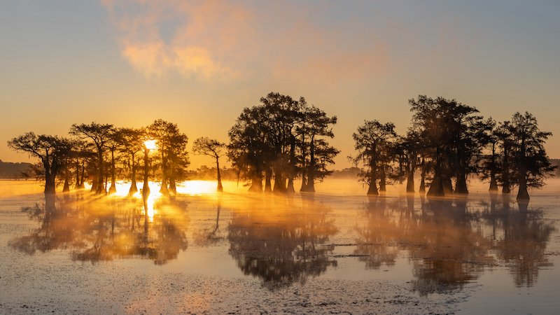 Sunrise At Swamp At Caddo Lake Texas