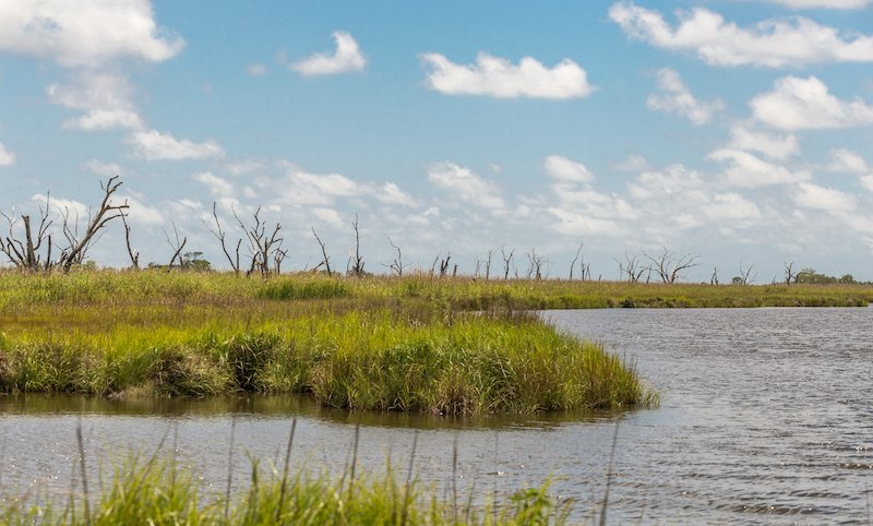 Large Grassy Marsh Field With Dead Trees In The Bayou Of Southern Louisiana On Sunny Day