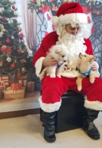 FREE Santa Photos provided by Charlotte Black Dogs @ Pet in the City |  |  |