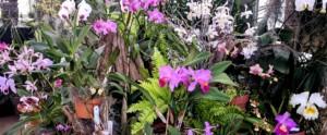 Annual Valentine's Week Orchid Sale @ UNC Charlotte Botanical Gardens        