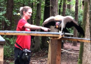Vulture Playground Fun @ Carolina Raptor Center | Huntersville | North Carolina | United States