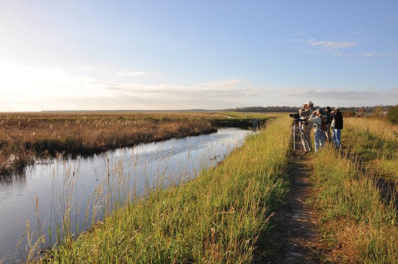 Alligator River Bird Watching