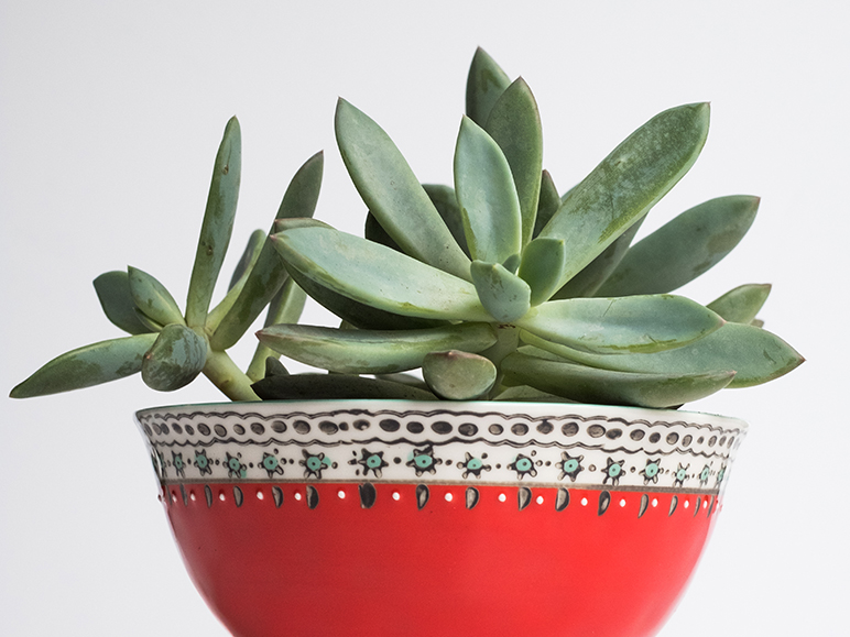 Simple Succulent Housewarming Gift Charlotte Magazine