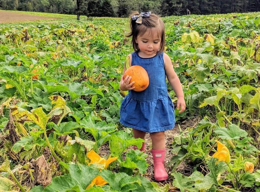 Pumpkins1 1