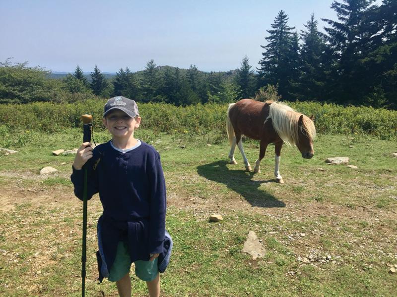Jackson W Pony