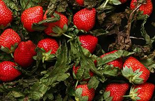 Strawberries 315