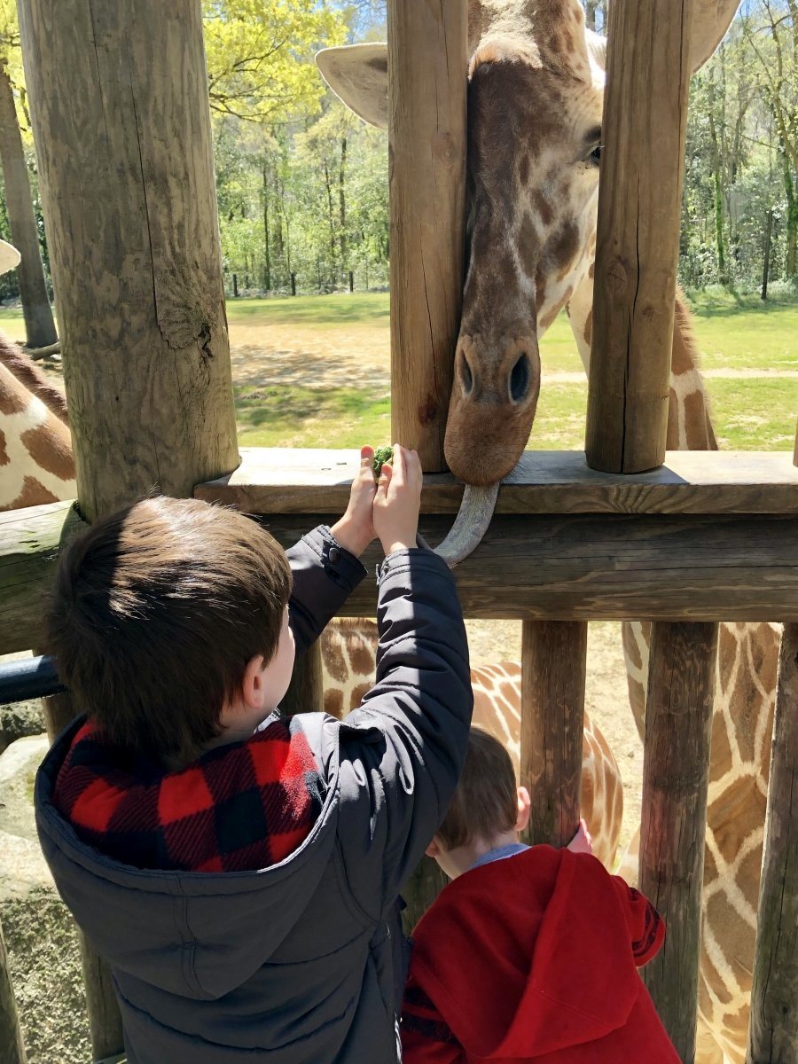 RiverbanksZoo_Giraffes