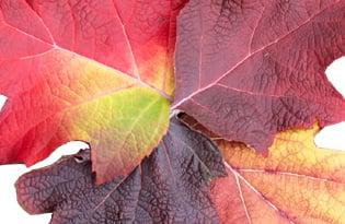 Leaves 315