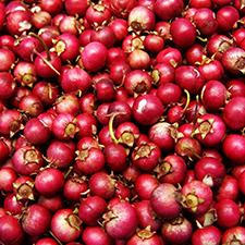 Cranberry 225