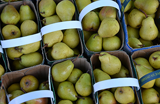 Pears 315