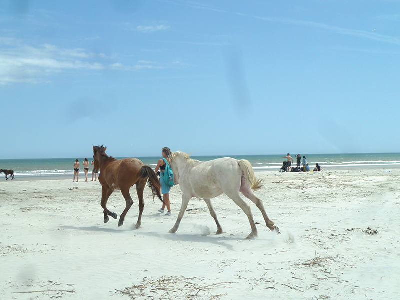 Cumberland Island Wild Horses On Beach