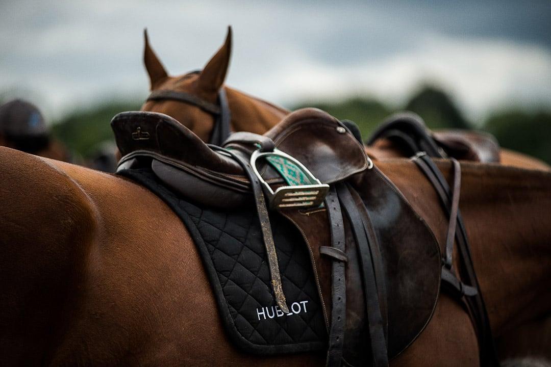 Greenwich Polo horses