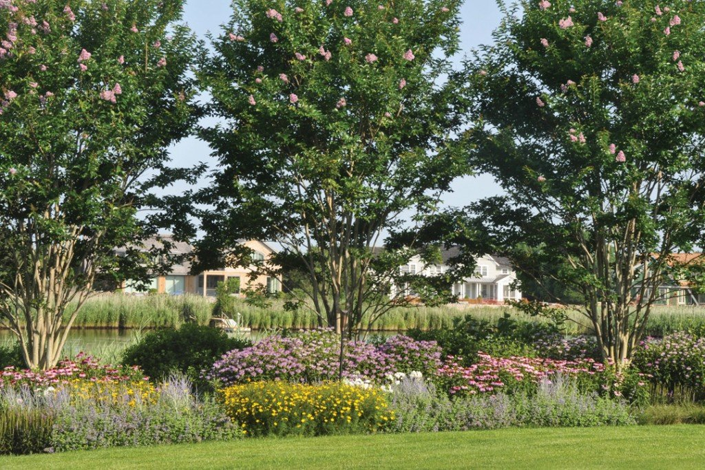 Tips For Planting The Perfect Perennial Border