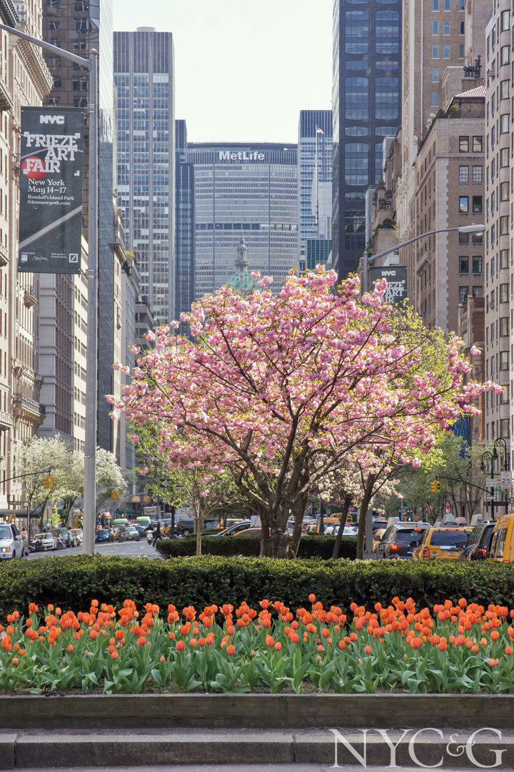 Planted by the Fund for Park Avenue, the street's famous malls are in full bloom in spring with cherry trees and fiery orange tulips.