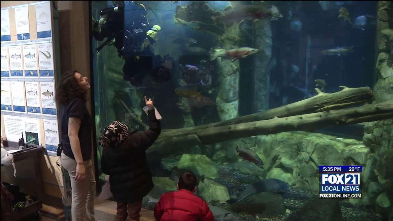 Great Lakes Aquarium Sees Record Attendance Fox21online