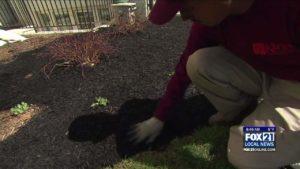 Locales Expertos dan Consejos de Jardinería para Northlanders - Fox21Online - FOX 21 Online 1