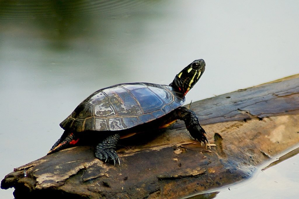 Thinking Turtle Safety this Spring - Fox21Online