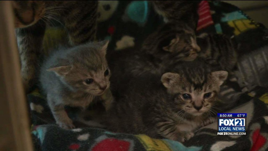 Animal Answers Archives - Fox21Online