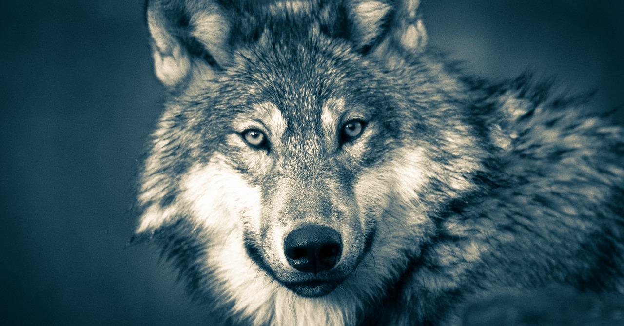 Free fox news downloads online
