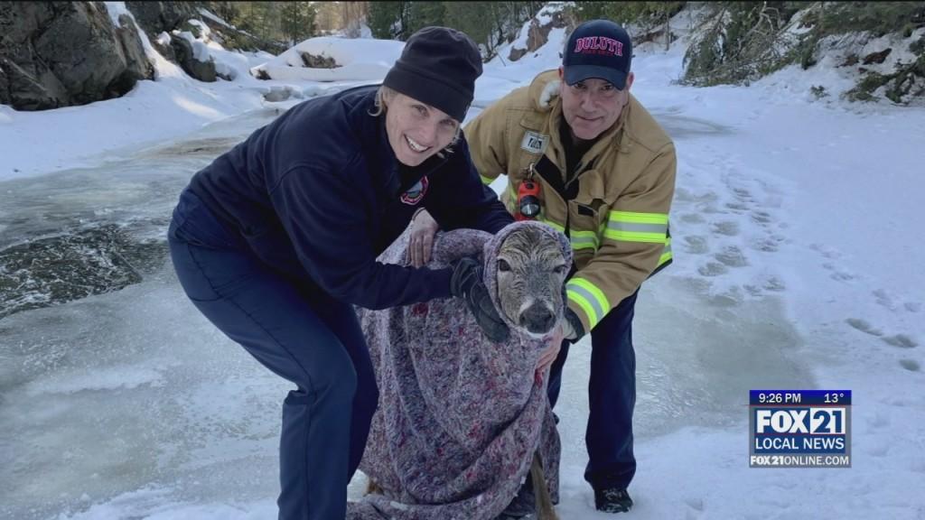 Deer Rescue